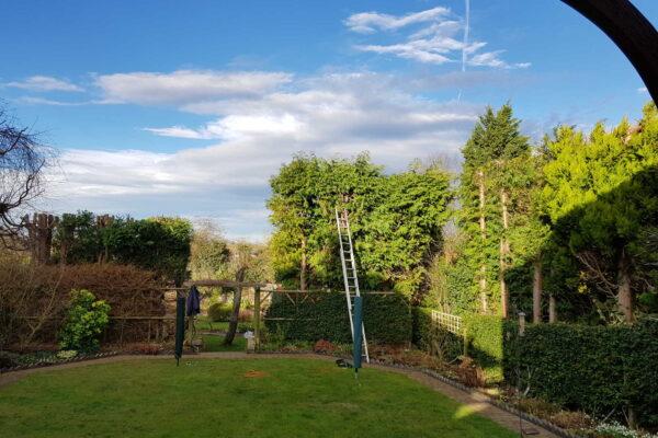Pruning conifers in Ilkeston